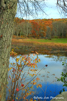 Warm Hues at Papermill Pond - Vertical