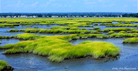 Summer Marshlands